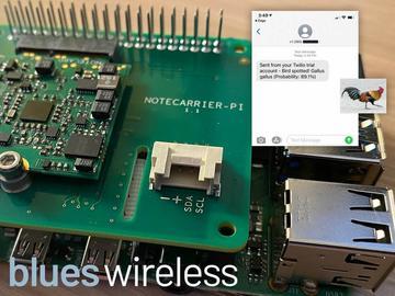 使用TensorFlow Lite和Raspberry Pi进行远程观鸟