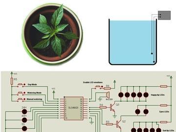 如何为室内植物建立自动浇水系统