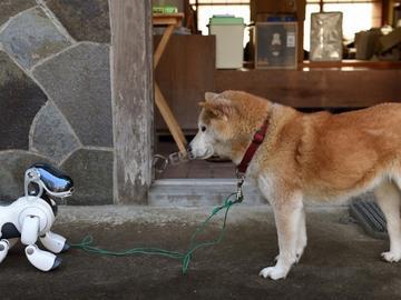 还记得索尼的Aibo 机械狗吗,它回归了