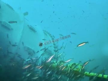 微软又有新奇玩法:视频观测在水下部署数据中心是否影响环境