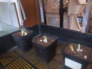 [项目演示]工程师的七夕礼物-阳台远程浇花神器